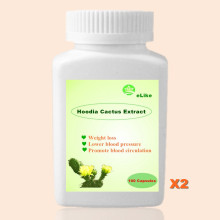 500mg 200PCS Nature Hoodia Cactus Extract  burn fat appetite control Pure Hoodia gordonii extracts  weight loss
