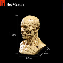 Resin Human Skull Skeleton Bones Statue Figurine Human Musculus facialis Masticatory muscles Skull Head Bone Artist Drawing(China)