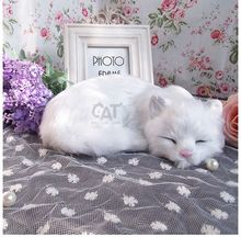 cute white simulation cat lifelike sleeping cat doll gift about 21x6x17cm