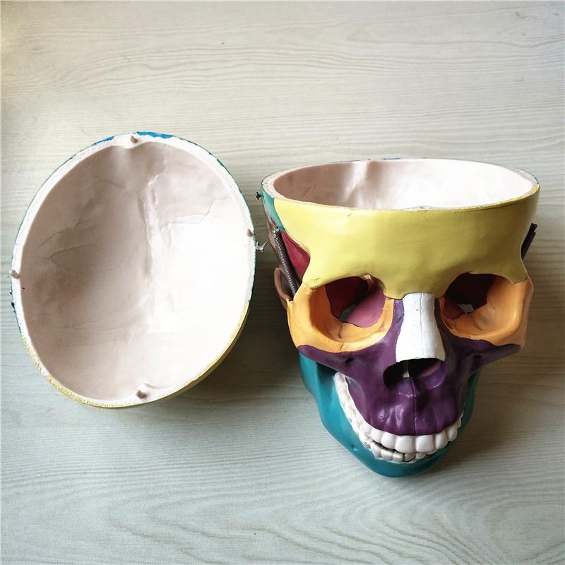 skull model05