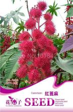 Ricinus Castor Bean seeds Beautiful Garden Flower A206(China)