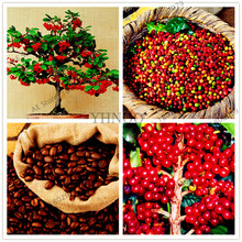 10pcs/bag coffee beans seeds green food organic fruit seeds vegetables Refreshing bonsai plant for home garden