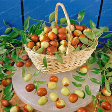 Hot Selling 10 Red Jujube Seeds Delicious Nutrition Fruit Seeds  Rare Exotic Bonsai Potted Gift Plant Decoration Home & Garden