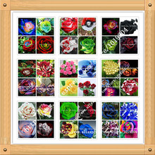 36 varieties of roses mixed seed, 200PC rare bonsai rainbow flower seeds, full color plant, A group of potted rose seeds