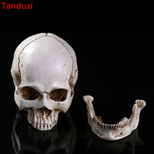 Tanduzi Medical Teaching Skull Separable Skeleton Head Resin Simulation Skeleton Head Halloween Props Skull Home Decoration