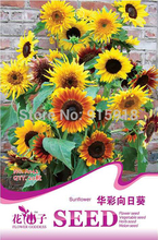 Buy 2 Get 1!(Can accumulate ) 1 Pack 20 Seed Rare Garden Mini SUNFLOWER Seeds Plant A142