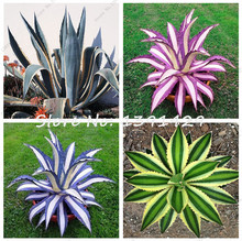 100pcs / Bag Agave Seeds Rare Succulent Seeds Cactus Sementes Balcony Bonsai Flower Seeds Ornamental Plants DIY Home Garden