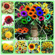 20 pcs/bag Teddy Bear Sunflower Seed Semi Dwarf Helianthus Garden Beautiful Flower Seeds Sunflower Seeds China(China)