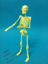 mini human skeleton educational model 20cm bulimic mannequin , educational toys model skeleton model