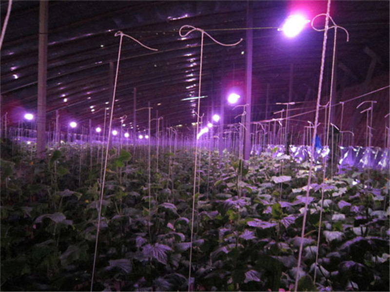 KINLAMS LED Grow Light Chip Full Spectrum 220V 380nm~780nm For Hydroponics/Greenhouse LED Plant Grow Lamps 230V 20W 30W 50W