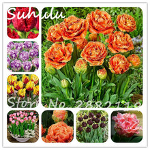 10pcs tulip seeds rare bonsai flower seeds ice cream as beautiful tulips potted perennial attractive light up your garden mixed