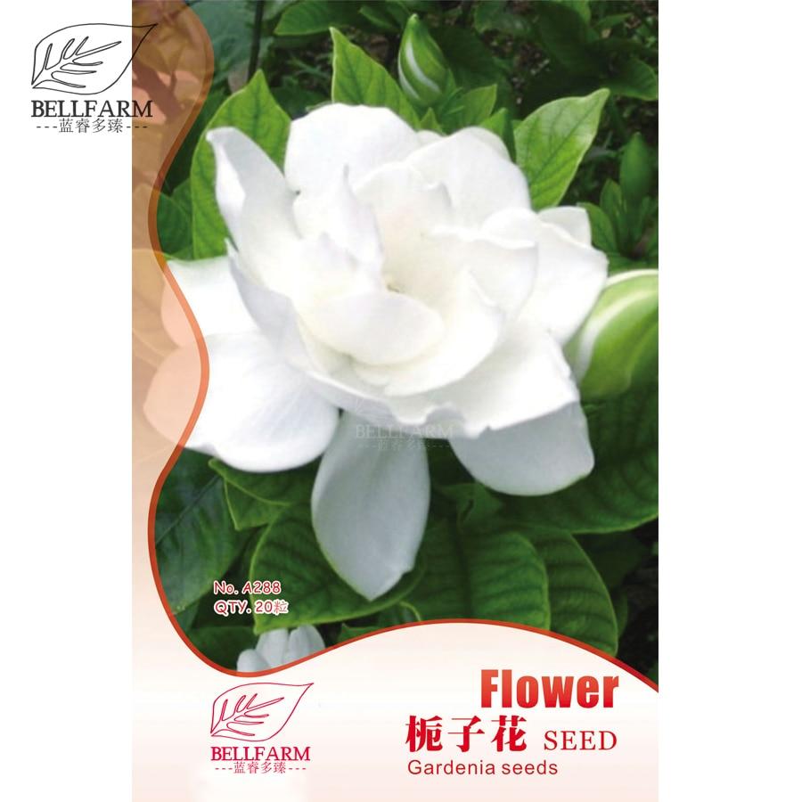 Us 1 bellfarm gardenia cape jasmine white flowers 20pcs bonsai pictures izmirmasajfo
