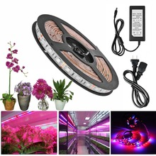 LED Plant Grow Lights 5050 LED Flexible Strip 12V Red Blue 3:1 4:1 5:1 power supply Greenhouse Hydroponic Plant Growing lamp(China)