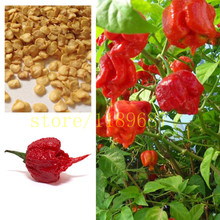 "1bag=200 pcs ghost pepper chili seeds vegetable Fresh Rare Red ""Carolina Reaper"" Pepper Seeds (hot chilli )(China)"