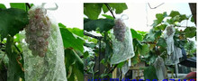 25cm*35cm Package material Grape bagging fruit pulp net bag bird insect loquat white plastic special grape bagging