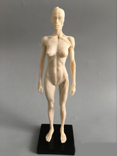 30cm Art mannequin musculoskeletal anatomical model structure of human body model CG Art Painting Sculpture model male/female