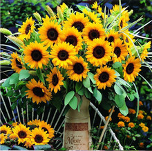 50 seeds/bag 8 Colors Available Sunflower Seeds Organic Helianthus Annuus Seeds Ornamental Flower Seeds Plant for Gardening