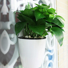 Half Round Imitation Ceramic Wall Hanging Flowerpot Hydroponics Chlorophytum Potted Flower Pots Wall Decoration with S Hook(China)