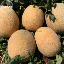 Italian Ananas Hami Melon Fruits,  20 seeds, 13% sugar contained sweet melon E3807