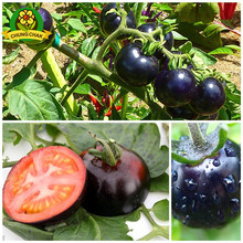HOT SALE Rare Organic Black Tomato Seeds 400PCS Chinese Home & Garden Vegetable Fruit Plants Free shipping High germination rate