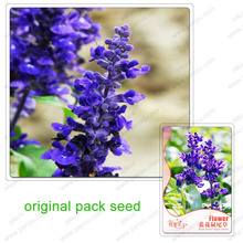 35 Seeds / Pack,Blue flower sage,green courtyard balcony spices bonsai plants potted flowers forage seed(China)
