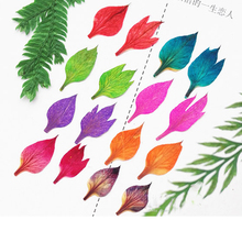 200pcs Love In A Mist Leaves Real Pressed flowers For Candle DIY Material Free shipment(China)