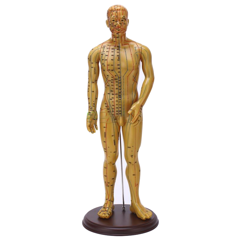 Massage &amp; Relaxation  Meridian Acupuncture Model 50cm Male Female With Base<br>