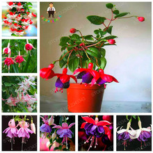 Mixed Packing 50pcs Fuchsia Seeds Bonsai Tree Diy Plant Flower Seeds Garden Home Perennial Flowers Pots Semillas Easy Planting
