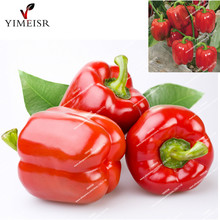 Red Sweet Pepper seeds Non GMO Organic Vegetable Seeds High Budding Rate Fast Growth edible chili seeds for Home Garden50pcs/bag