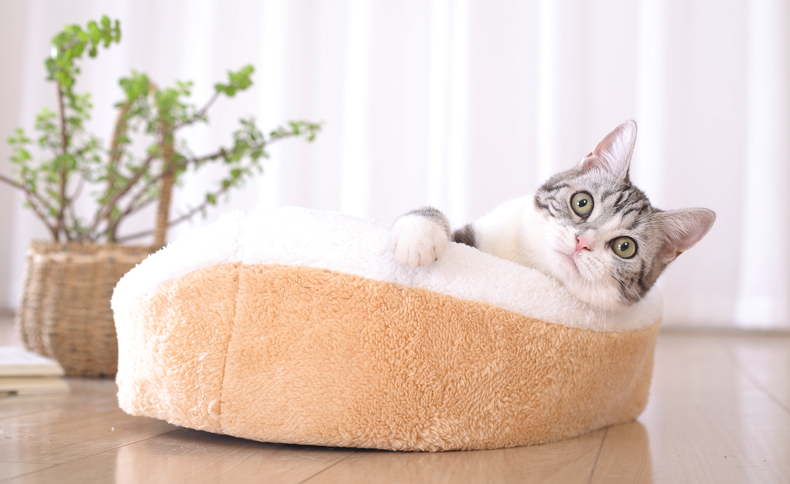Cat Bed - Cozy Hideaway Covered Dual House Bed 6