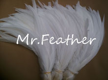 "Free shipping 500pcs Pure white rooster tail feathers 30-35cm 12-14"" Cock tail feather(China)"