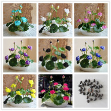 10pcs Bowl Lotus Seed Hydroponic Plants Aquatic Plants Flower Pot lotus Water Lily Seeds Bonsai Home Garden, Garden Supplies