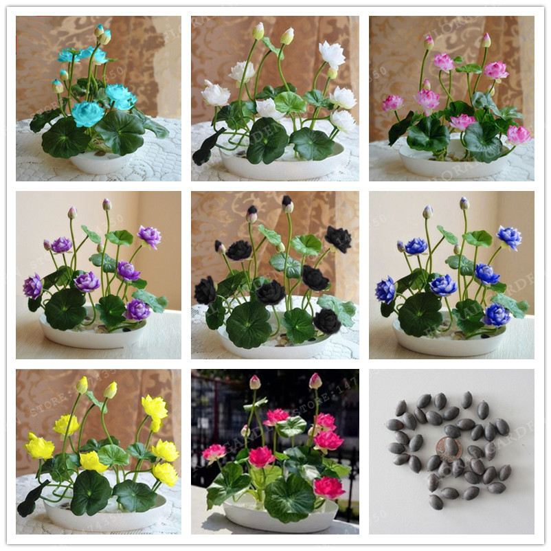 Online buy wholesale water garden plants from china water for Cheap pond plants