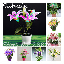HOT Sale 100 Pcs Lily Seeds, Cheap Perfume Lilies Seeds,Rare Colorful Flower Garden Plant Mixing Different Varieties Free Shippg