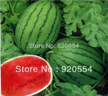 Hot selling 10pcs Early spring watermenlon seeds bonsai seeds fruit plant DIY home garden free shipping