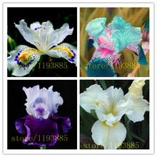 iris seeds rare 50 orchid seeds rare flower for home decoration baby love gift(China)