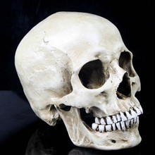 P-Flame Human Skull Resin Replica Medical Model Lifesize 1:1 Halloween Home Decoration High Quality Decorative Craft Skull(China)