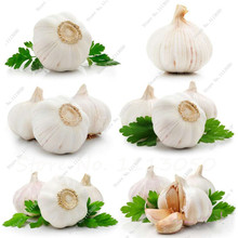 5 pcs garlic bulbs seeds add special favor great cooking herbs and vegetable plants for Home Garden Edible Bonsai Seeds