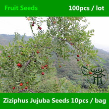Strong Adaptability Ziziphus Jujuba Seeds 100pcs, Unique Species Chinese Date Tree Seeds, Widely Cultivated Red Date Fruit Seeds