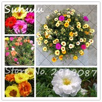 Rare-Beautiful-200-Particles-Mixed-Mexican-rose-Seeds-Sun-Flower-Moss-Rose-Decoration-Ornamental-plant-Diy.jpg_200x200