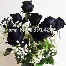 11.11 On Sale!!! Black Rose Seeds China Rare Amazingly Beautiful Black Rose Popular garden flower 120PCS Seeds +Mysterious Gift