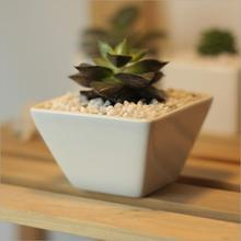 Creative simple white mini fleshy pots ceramic Pot Desktop hypotenuse square 8*8*5.5cm freeshipping