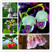 50 Pcs/bag Lily Of The Valley Flower Seeds Indoor Rare Bell Orchid Plant Rich Aroma Bonsai Plants Balcony potted DIY Home garden(China)