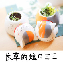 Natsume friends account cat teacher cartoon cute ceramic pots pots around the cartoon Meng Meng's cat teacher flower pots