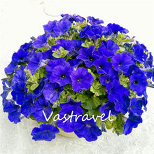 Garden Petunia Flower 100 Pcs Seeds / Bag Popular Garden Flower for Flower Beds, Baskets and Containers , Bonsai .Easy to Grow(China)