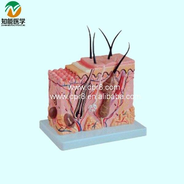 BIX-A1059 Normal Skin Model  MQ145<br>
