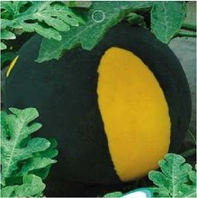 Black Yellow Skin Red Watermelon 'Crystal Ball' Seeds, Original Pack, 10 Seeds / Pack, Sweet Water Melon Fruit B036