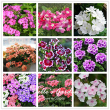 100pcs Multi-colors Variety Verbena Seeds Hardy Plants Flower Seeds Exotic Ornamental Flowers Bonsai Seeds(China)