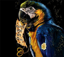 new fashion caystal Parrot reads 5D Rhinestone painting crystal Home round DIY Diamond painting cross stitch diamond embroidery(China)