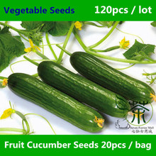 Mini Garden Fruit Cucumber Seeds For Planting 120 pcs, Vegetable Seeds Welcomed By The Market, Cucumis Sativus Linn. Seeds Plant